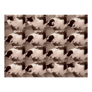 Vintage Black and White Cat Print