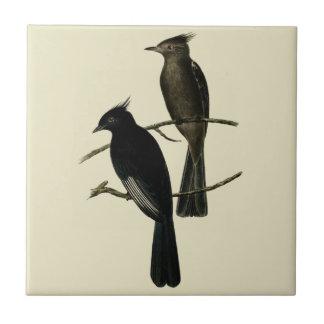 Vintage Black Flycatcher Bird Tile