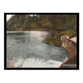 Vintage Black Hills Postcard