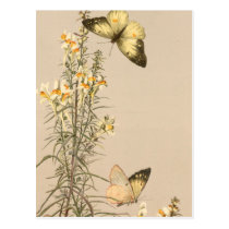 Vintage black white butterfly yellow white floral postcard