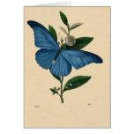 Vintage Blau Schmetterling, feliz cumpleaños Tarjeta De Felicitación