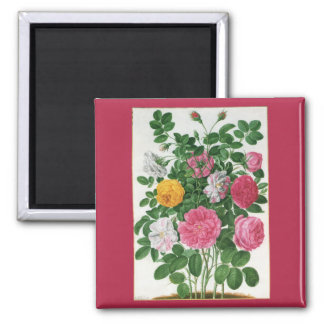 Vintage Blooming Flowers, Spring Garden Roses 2 Inch Square Magnet