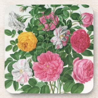 Vintage Blooming Flowers, Spring Garden Roses Beverage Coasters