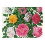 Vintage Blooming Flowers, Spring Garden Roses Postcard