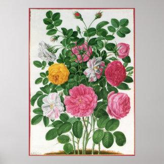 Vintage Blooming Flowers, Spring Garden Roses Print
