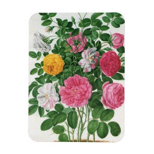 Vintage Blooming Flowers, Spring Garden Roses Vinyl Magnet