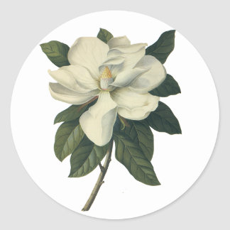 Vintage Blooming White Magnolia Blossom Flowers Classic Round Sticker