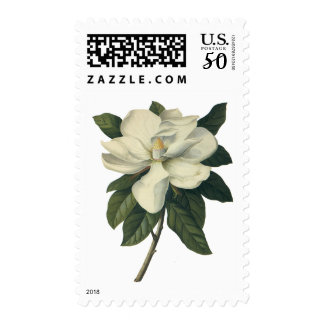 Vintage Blooming White Magnolia Blossom Flowers Postage