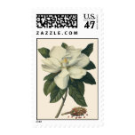 Vintage Blooming White Magnolia Blossom Flowers Postage Stamp