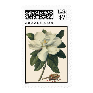 Vintage Blooming White Magnolia Blossom Flowers Postage Stamp