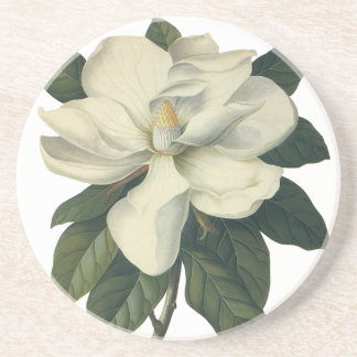 Vintage Blooming White Magnolia Blossom Flowers Sandstone Coaster