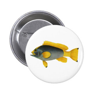 Vintage Blue and Yellow Grouper Fish, Marine Life Pinback Button