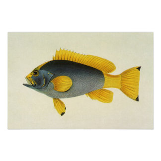 Vintage Blue and Yellow Grouper Fish, Marine Life Poster