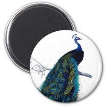 Vintage Blue Elegant Colorful Peacock Magnet