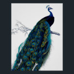 """Vintage Blue Elegant Colorful Peacock Poster<br><div class=""""desc"""">A vintage blue green and yellow royal colorful peacock.A vintage style image on white background .The perfect gift idea for the animal lover or anyone on any occasion.</div>"""