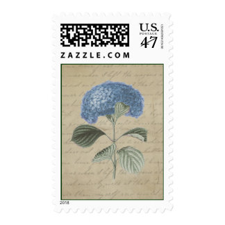 Vintage Blue Hydrangea on Aged Antique Calligraphy Postage