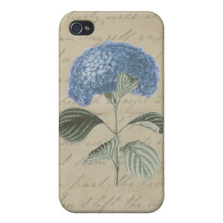 Vintage Blue Hydrangea on Antique Calligraphy Cover For iPhone 4