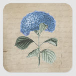 Vintage Blue Hydrangea on Old Paper Round Stickers