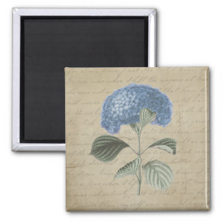 Vintage Blue Hydrangea with Antique Calligraphy 2 Inch Square Magnet