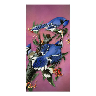 Vintage Blue Jays Illustration (Audubon) Photo Cards