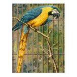 Vintage Blue Macaw Parrot Print Postcard