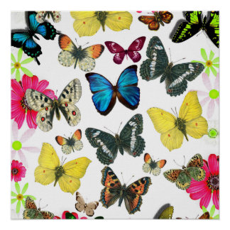 Vintage Blue Red Yellow Colorful Butterflies Poster