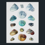 """Vintage blue Seashells poster<br><div class=""""desc"""">Vintage blue seashells illustration from the 1849 book &quot;Die Land und Susswasser Mollusken von Java&quot;.</div>"""