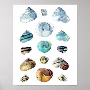 Vintage Blue Seashells Poster at Zazzle
