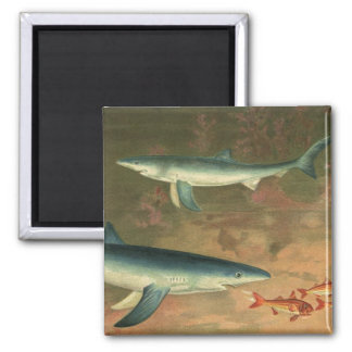 Vintage Blue Shark Eating Fish Marine Aquatic Life 2 Inch Square Magnet
