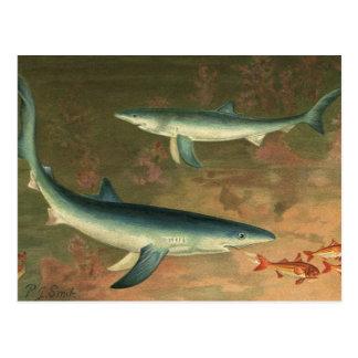 Vintage Blue Shark Eating Fish Marine Aquatic Life Postcard