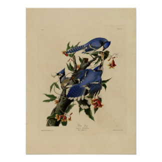 Vintage Bluebird Painting Poster
