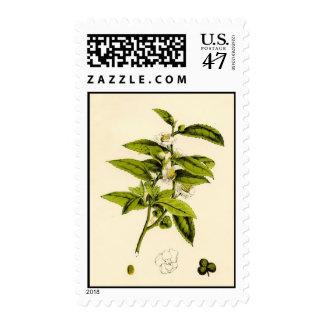 Vintage Bontanical Tea Plant Postage Stamps