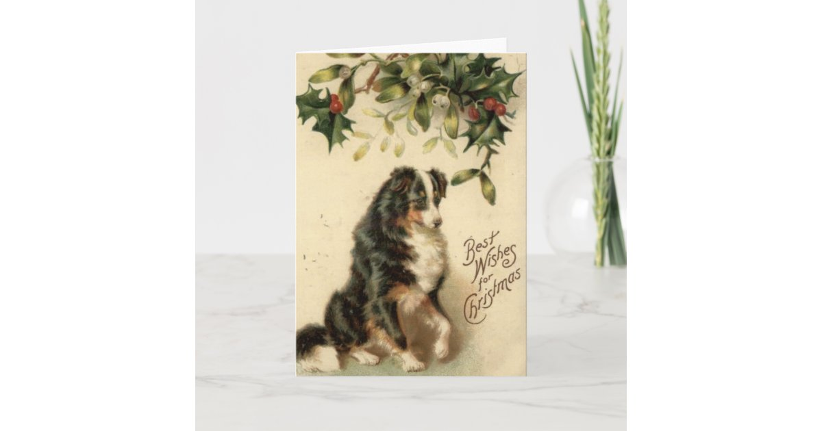 Vintage Border Collie Christmas Card | Zazzle.com