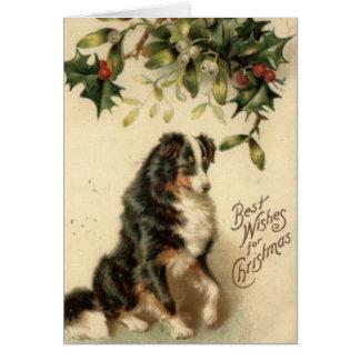 Vintage Border Collie Christmas Card