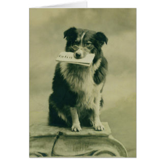 Vintage Border Collie Greeting Card