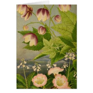 Vintage Botanical Anemone Book Illustration Card
