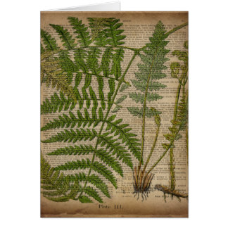 vintage botanical art  newspaper Decorative ferns Greeting Cards