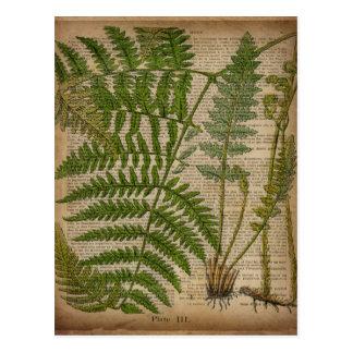 vintage botanical art  newspaper Decorative ferns Postcard