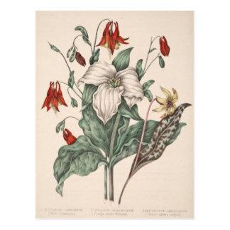 Vintage Botanical Art Postcard