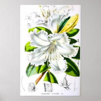 Vintage Botanical Art Posters