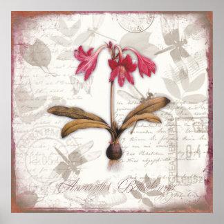 Vintage botanical art prints Amaryllis Belladonna Poster