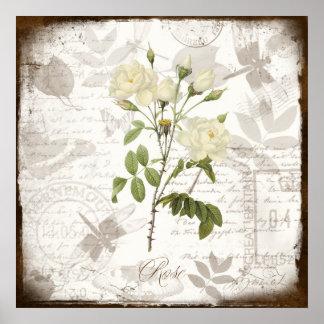 Vintage botanical art prints ~ English Rose Posters
