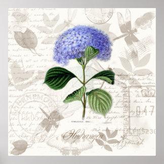 Vintage botanical art prints Heirloom Hydrangea Posters