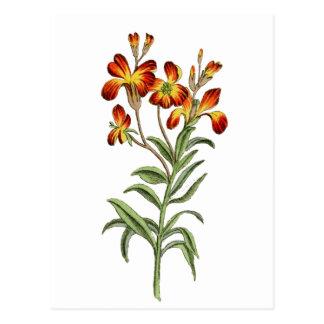 Vintage botanical artwork postcard