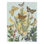 Vintage Botanical Butterflies...postcard