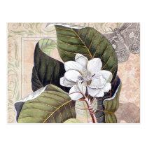 Vintage Botanical Collage with Magnolia Postcard