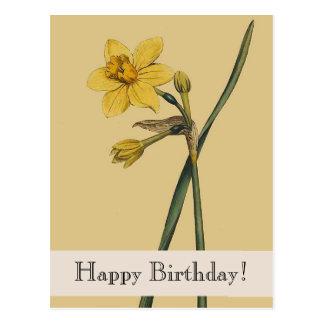 Vintage Botanical Daffodil Happy Birthday Postcard