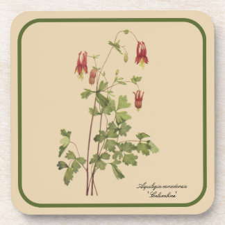 Vintage Botanical Drawing of Columbine Coaster Set