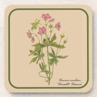 Vintage Botanical Drawing of Wild Geranium Drink Coasters