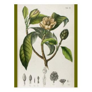 Vintage Botanical Flower Illustration Postcard